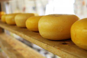 cheese-2785